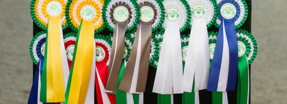 Theresa Volckmann ist Süddeutsche Pony-Meisterin